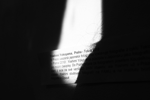 26 Blues v lese - foto Petr Horcicka